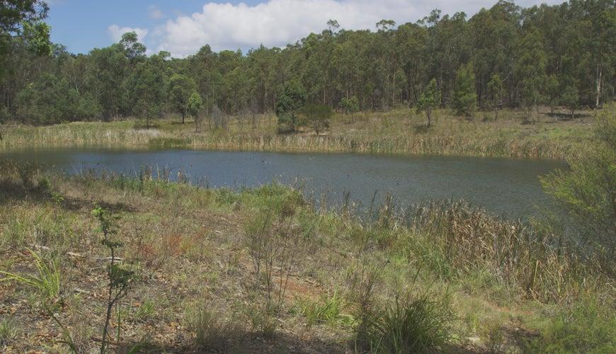 Bloomfield Lagoon Mine Void Rehabilitation